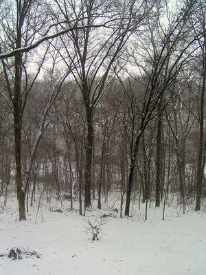 SnowJan_2010